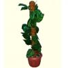 coco husk stick with money plant